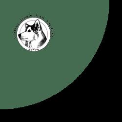 Kalirraq S Siberian Sleddog Database Select Dog
